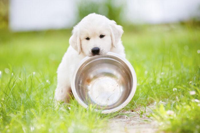Чем кормить щенка?