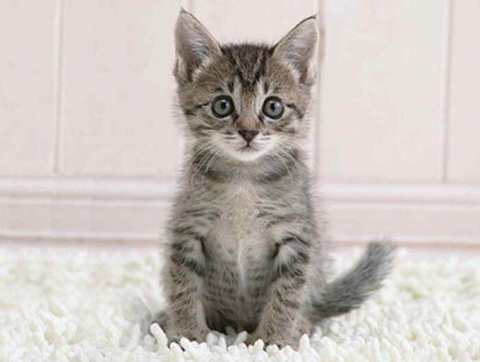 Как ухаживать за котенком