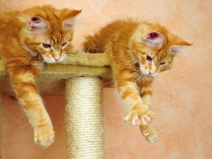 Когтеточка для котят