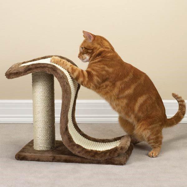 Когтеточка и котята