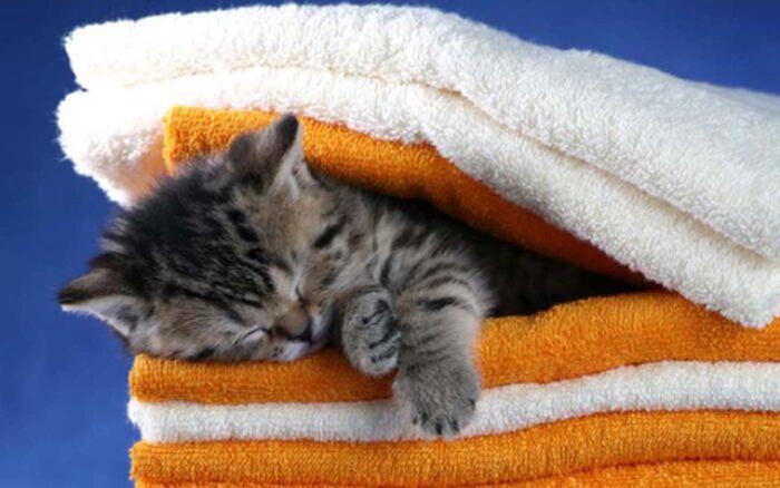 Уход за котенком в домашних условиях