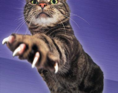 Обстричь когти котенку