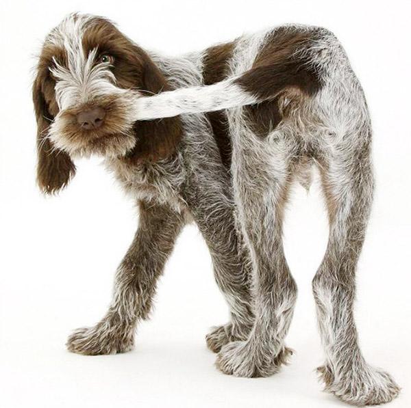 Собака грызет хвост