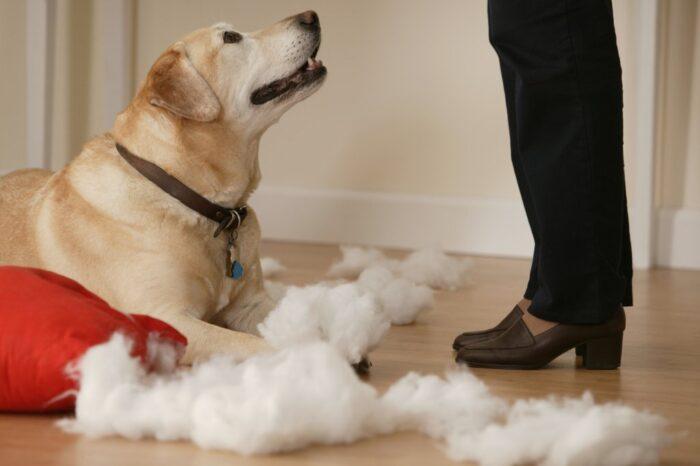 Что делать, если пес все погрыз?