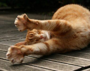 Кошка плохо себя ведет