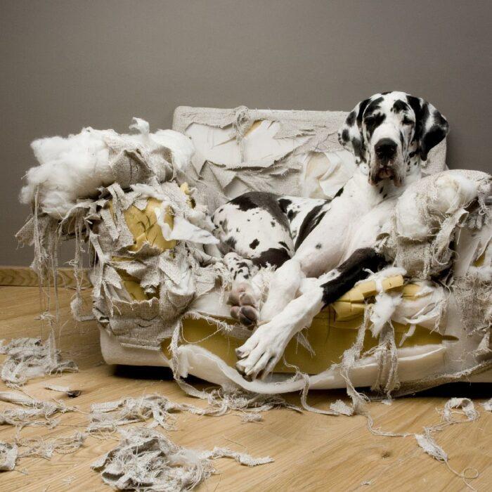 Как отучить собаку грызть все подряд?