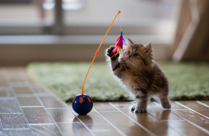 Какие игрушки любят котята?