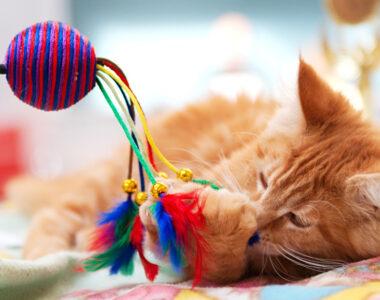 Игрушки для котят