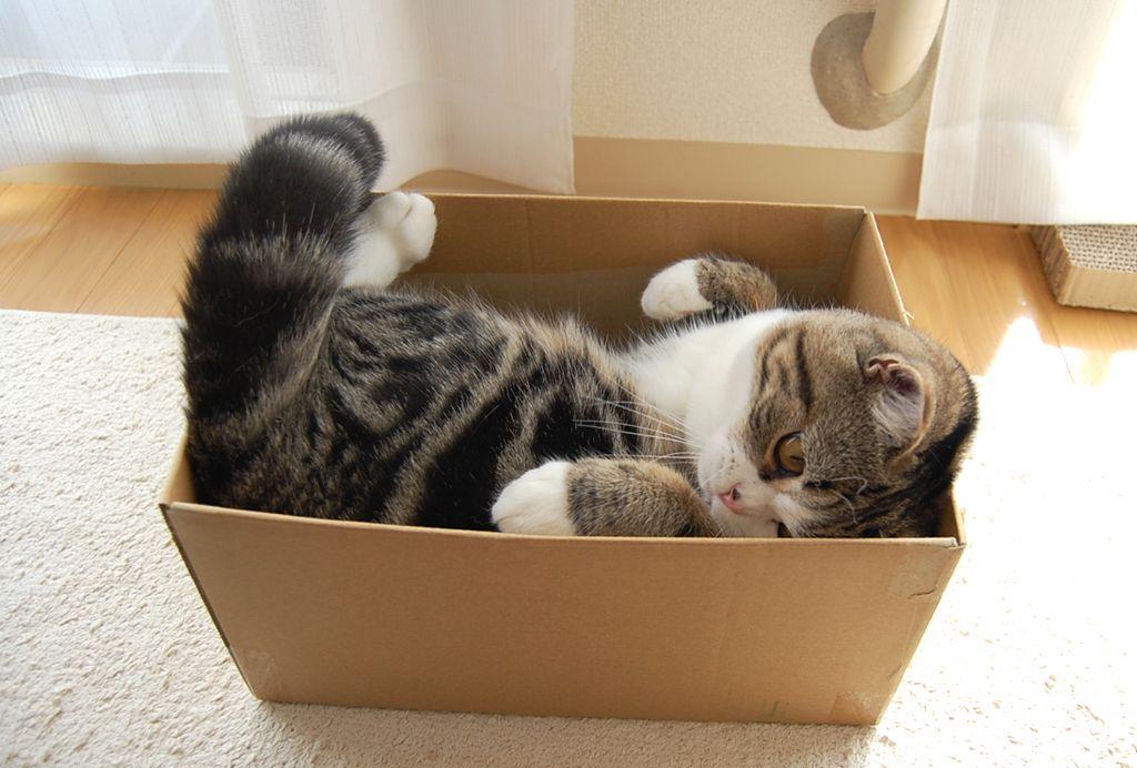 почему коты любят коробки и пакеты