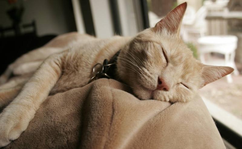 сколько спят кошки в день
