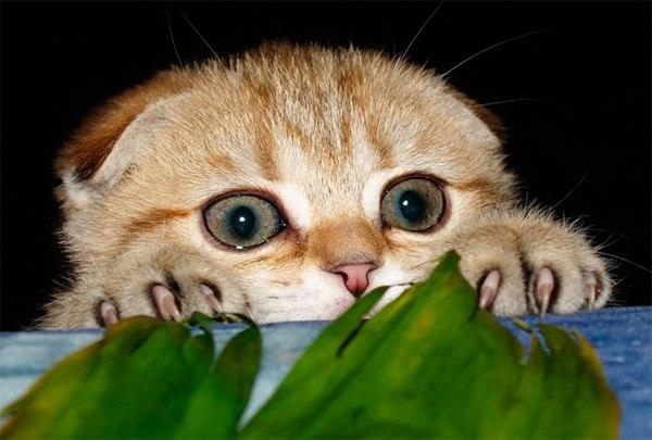 какие запахи отпугивают кошек чтобы не гадили
