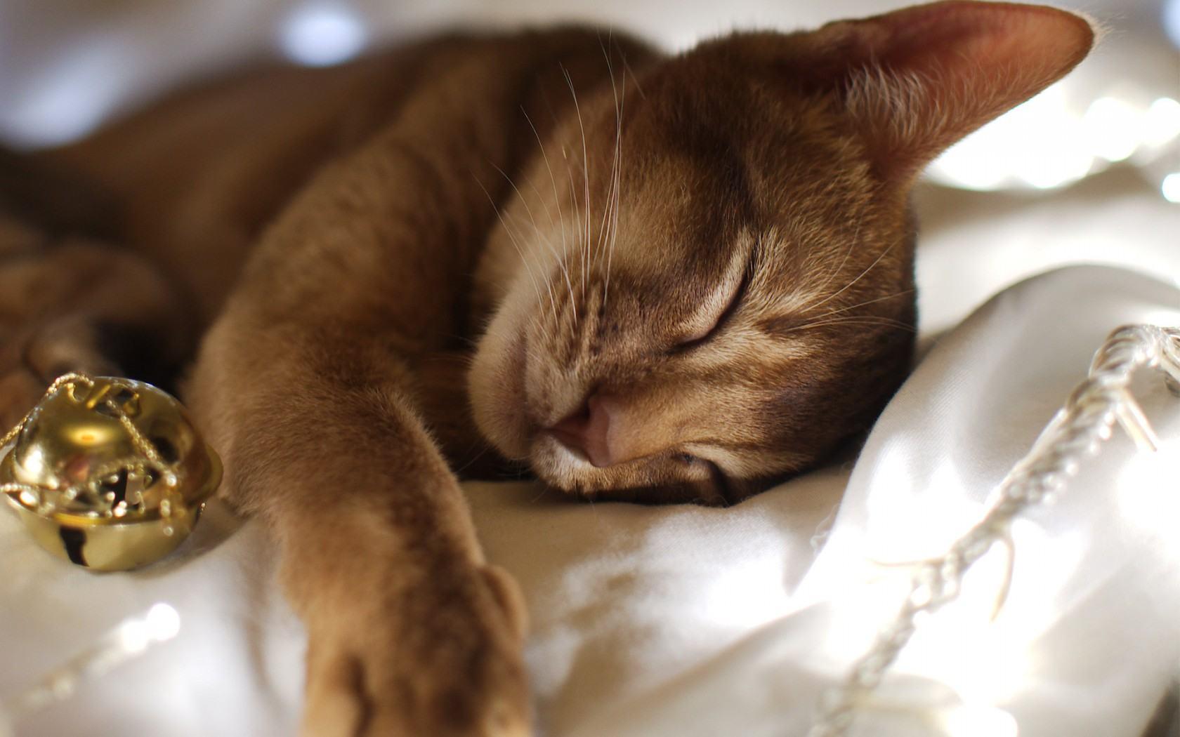 сколько спят кошки в сутки
