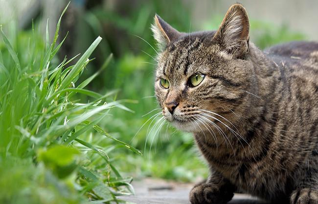 какую траву любят кошки