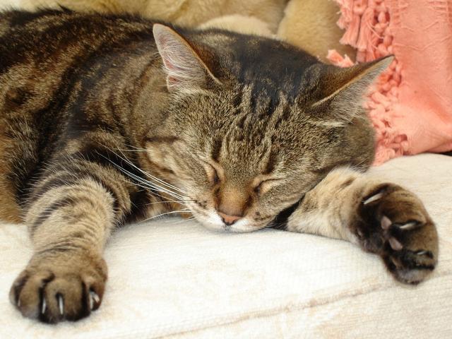 сколько часов в сутки спит кошка