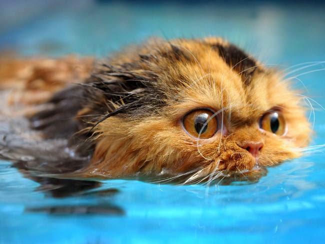 почему коты боятся воды