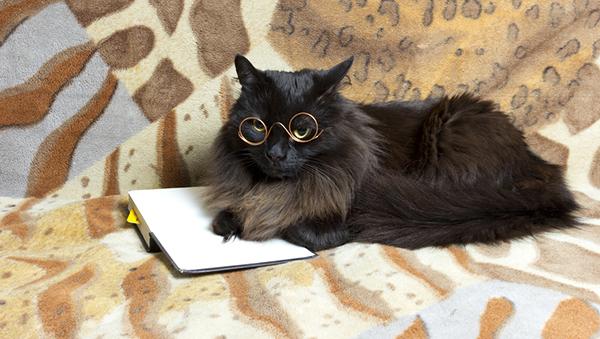 самые умные кошки
