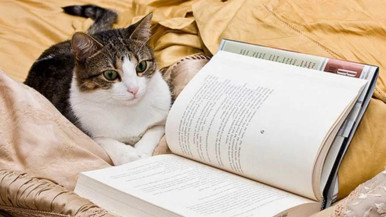 какая порода кошек самая умная