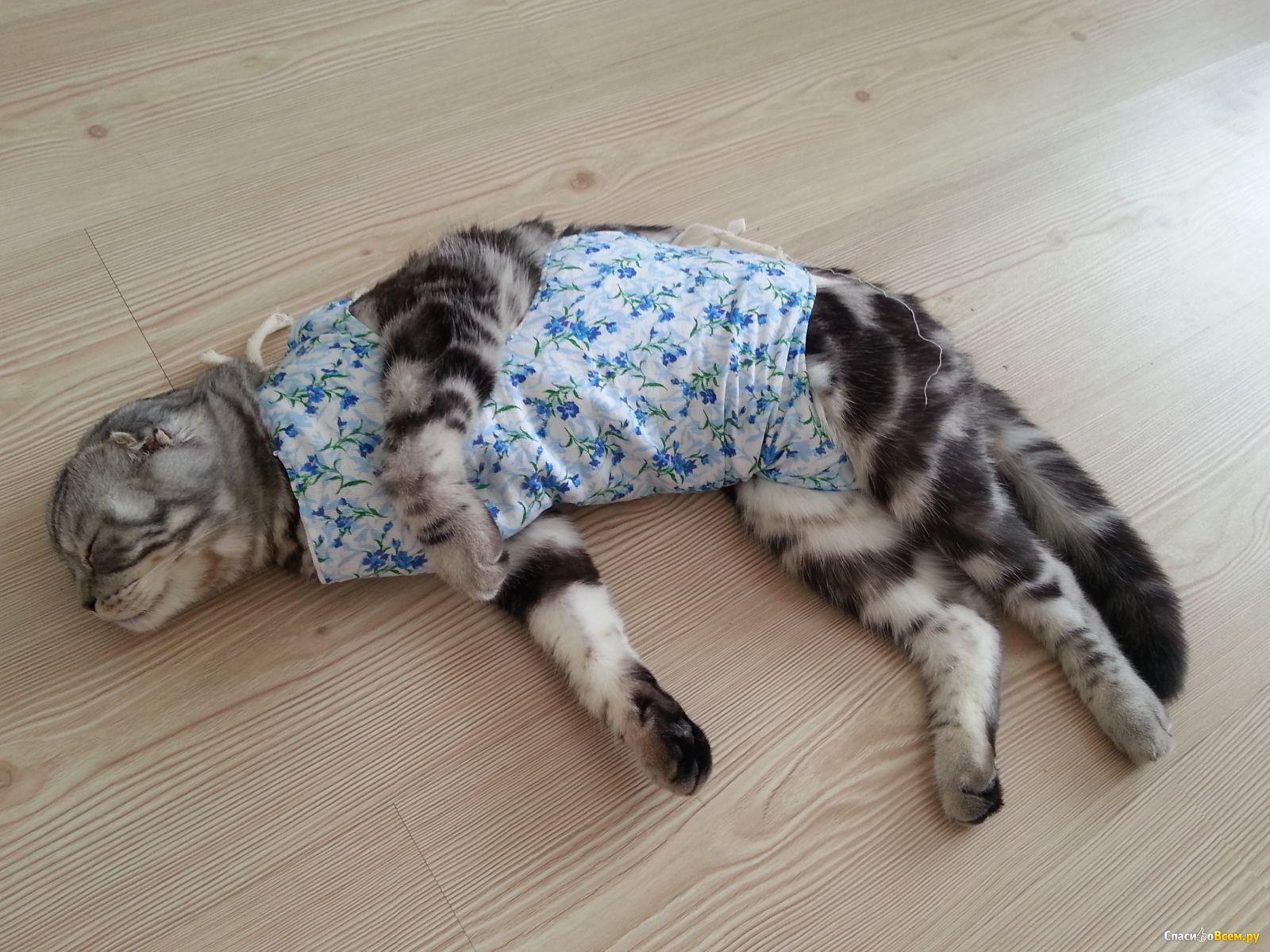 стерилизация кошек возраст и последствия