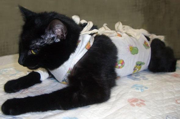 когда надо стерилизовать кошку возраст