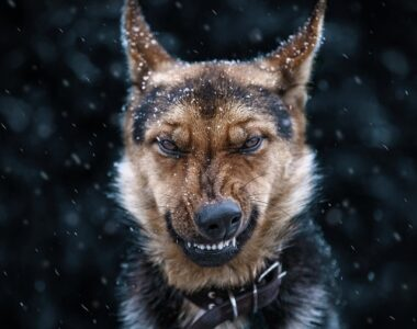 самые злые собаки