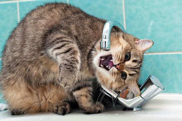 кот много пьет воды причины