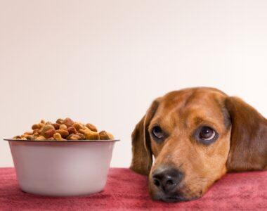 как перевести собаку на сухой корм