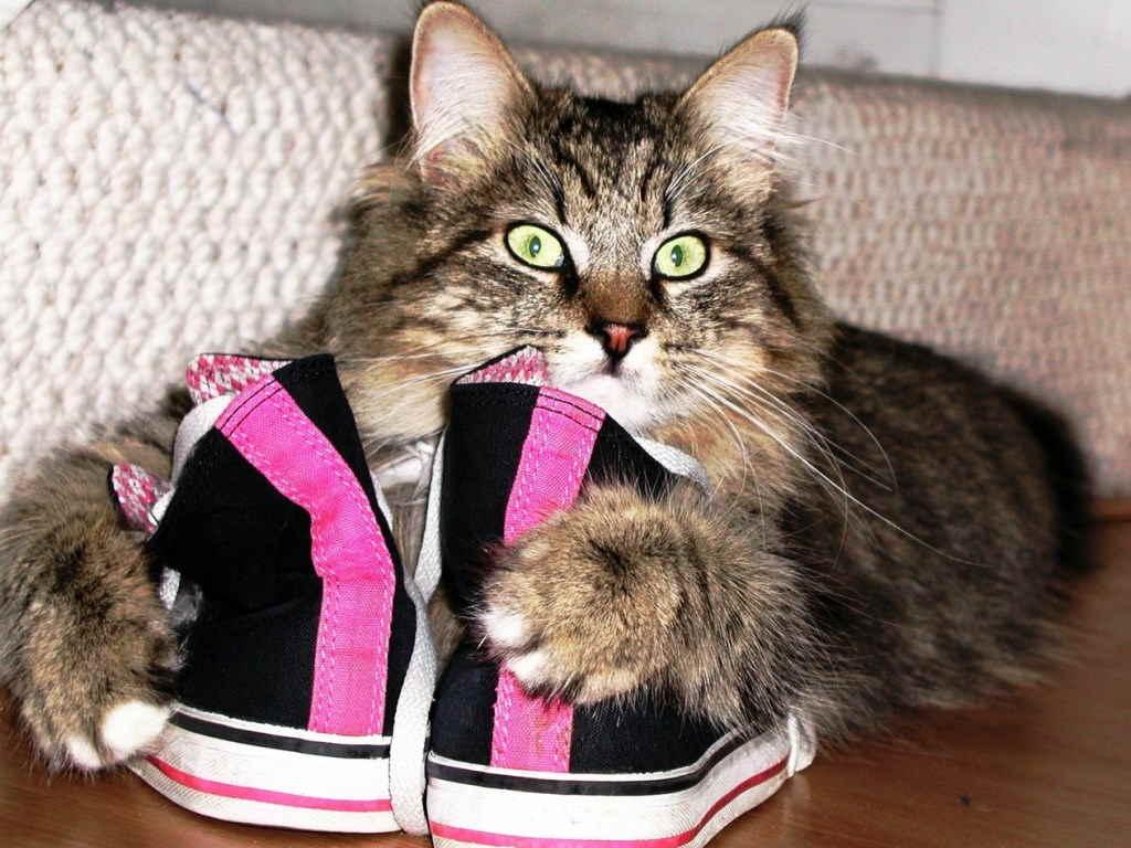 как убрать запах мочи кота с обуви