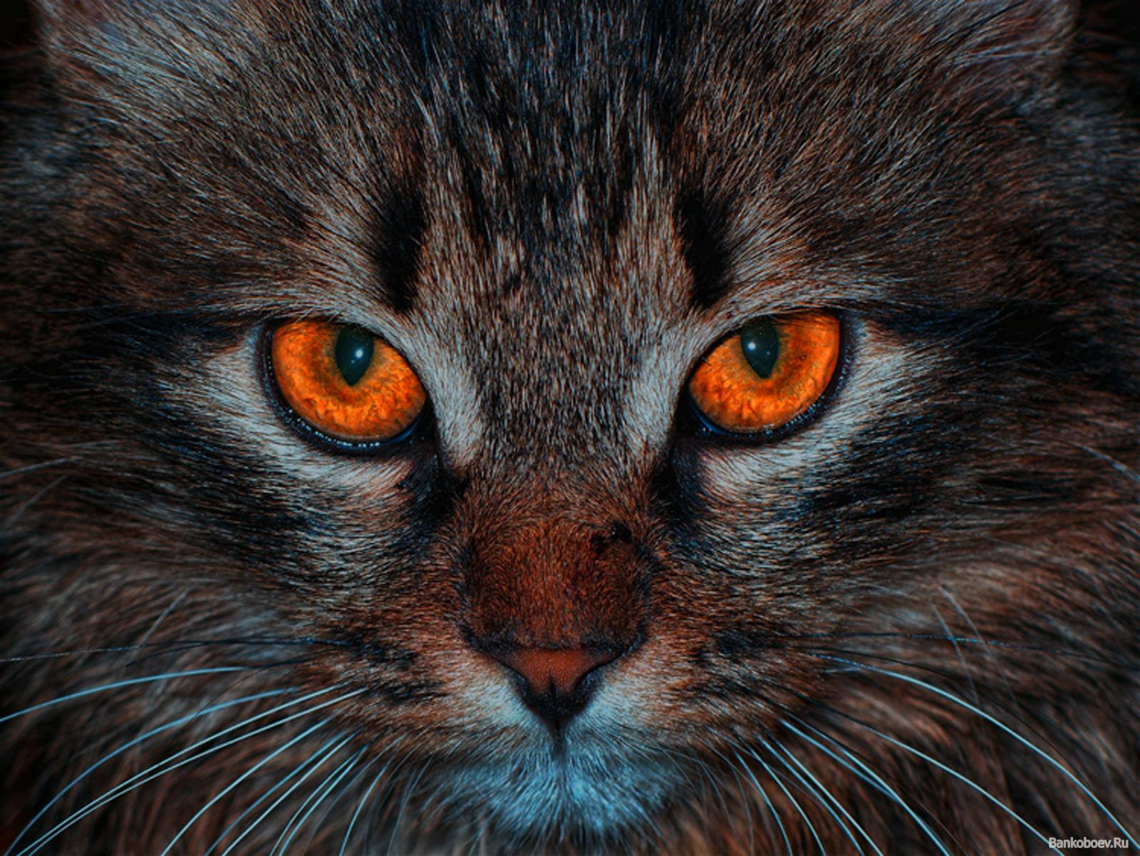 как узнать возраст кошки в домашних условиях
