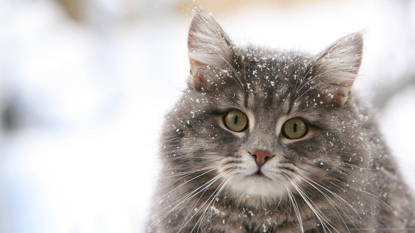 как узнать возраст кота