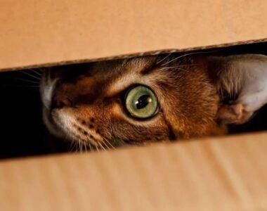 почему кошка прячется в темные места