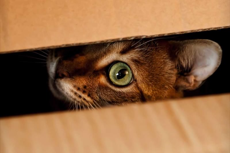 Кошка прячется: что делать? И почему кошки забиваются в укрытия?