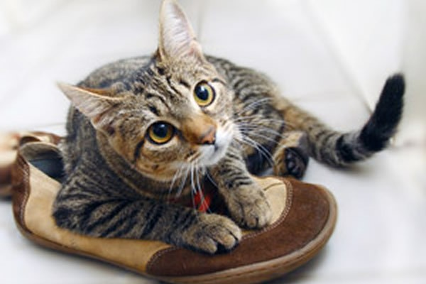 Кот пометил обувь как избавиться от запаха быстро