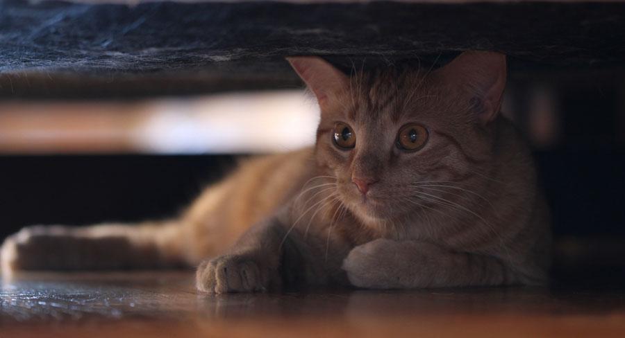 кошка всего боится и прячется что делать