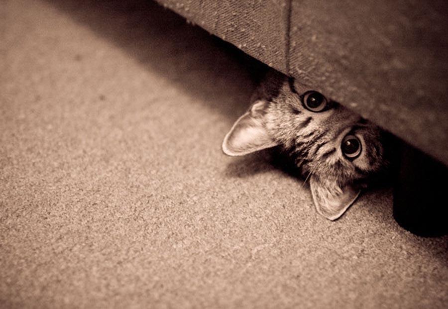 прячется кошка в тёмные места