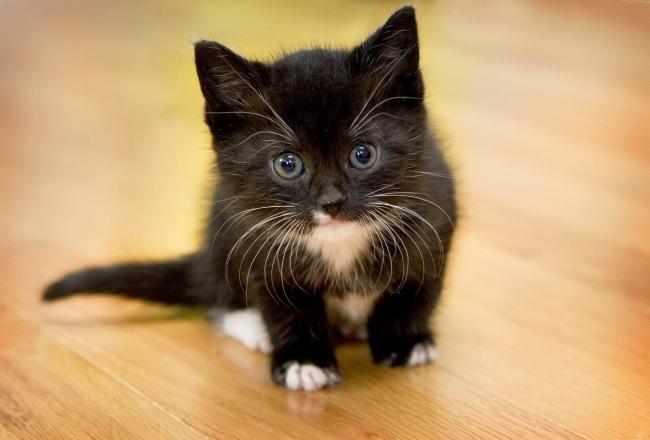 до какого возраста растут обычные коты