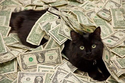 самые дорогие кошки