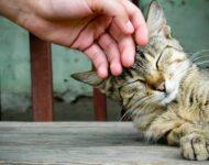 самые ласковые кошки