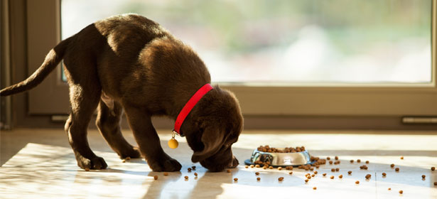 собака не хочет есть сухой корм