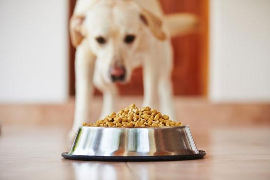 как заставить собаку есть сухой корм