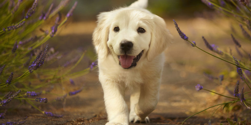 самые милые породы собак