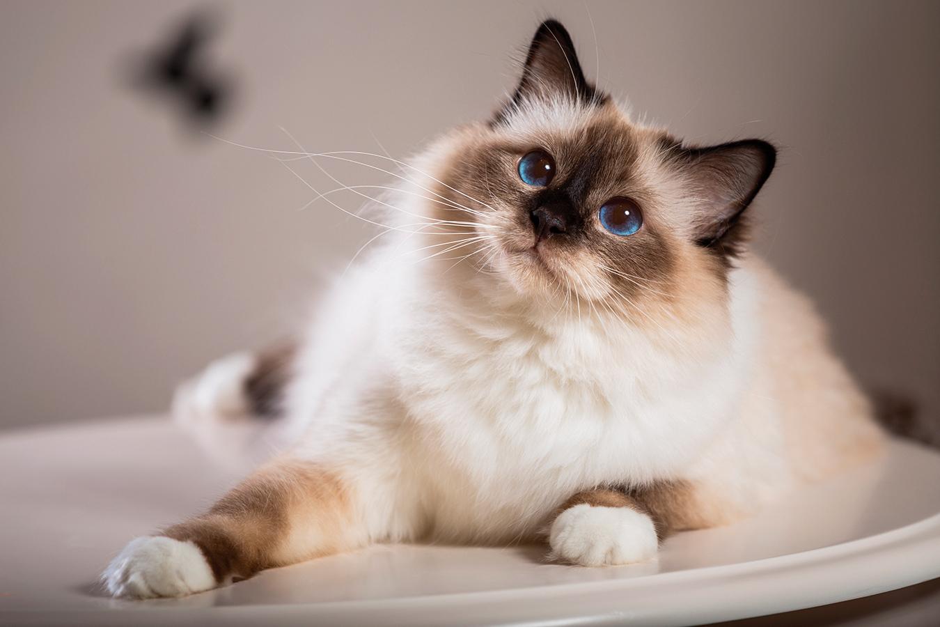 Кошка с котенком картинка для занятий здесь