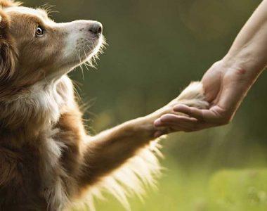 Самые послушные породы собак
